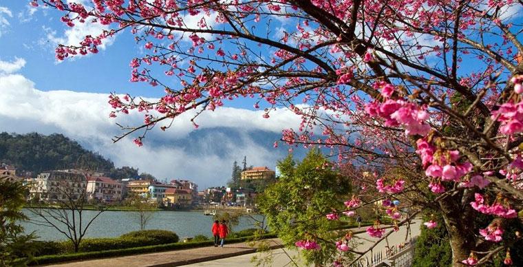 Cherry Blossoms datant Promo Code 2014