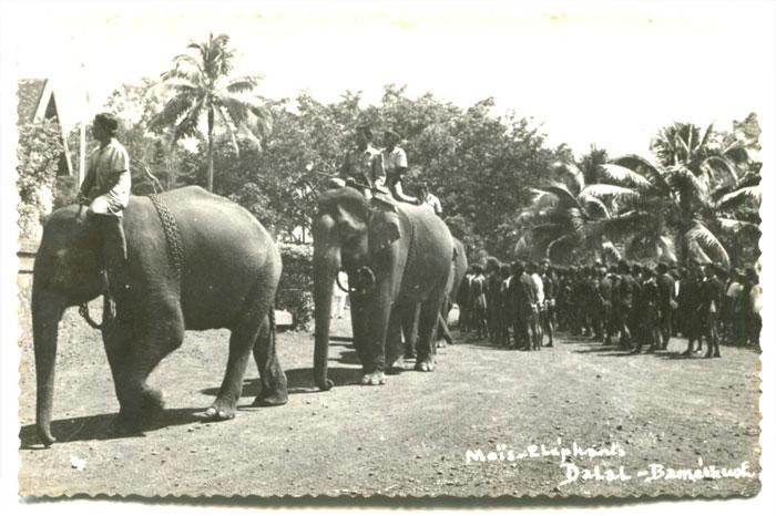Dalat Vietnam elephant