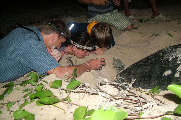poulo condore vietnam con dao Observation de la ponte des tortues