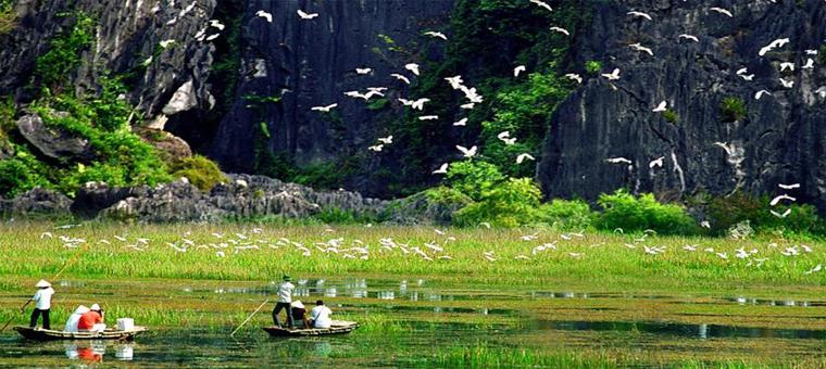 Van long oiseaux