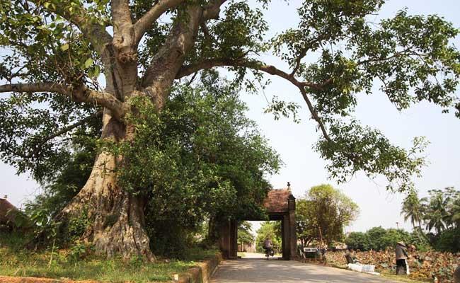 ancien village duong lam hanoi