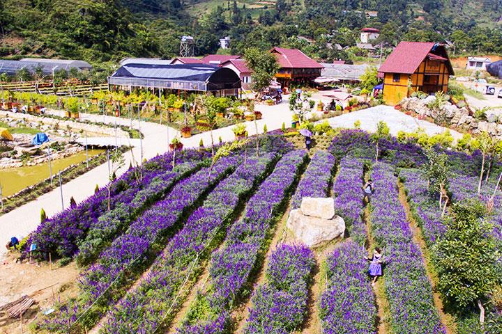 bac ha vietnam vallee fleur