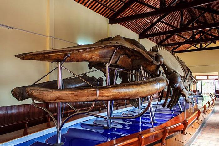 7 animaux Vietnam baleine