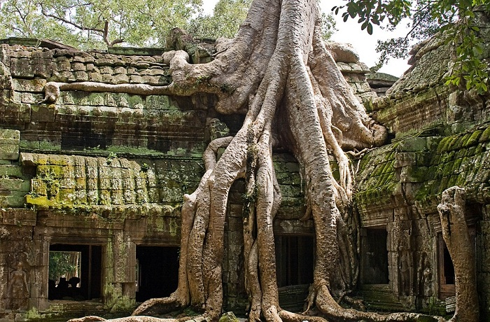 beaux temples angkor ta prohm