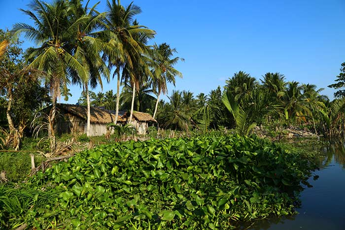 Ben Tre Vietnam top choses a faire vegetation