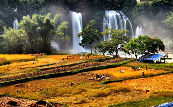 cascade ban gioc rizieres