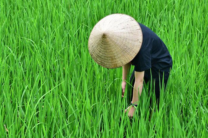 idées souvenirs Vietnam chapeau conique