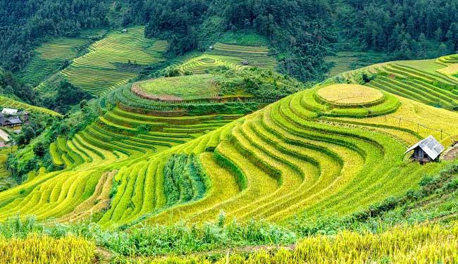 circuit vietnam 10 jours riziere terrasse mu cang chai
