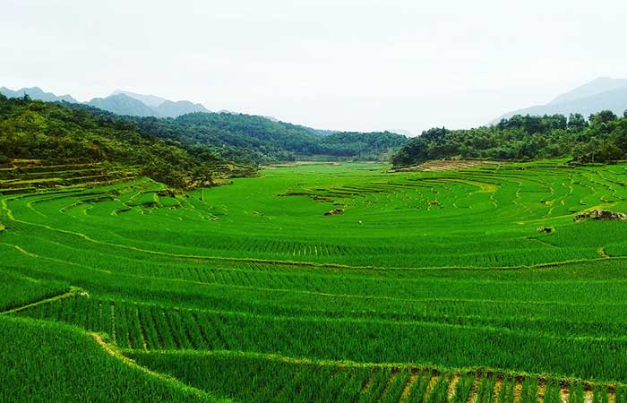 circuit vietnam 15 jours pu luong riziere terasse