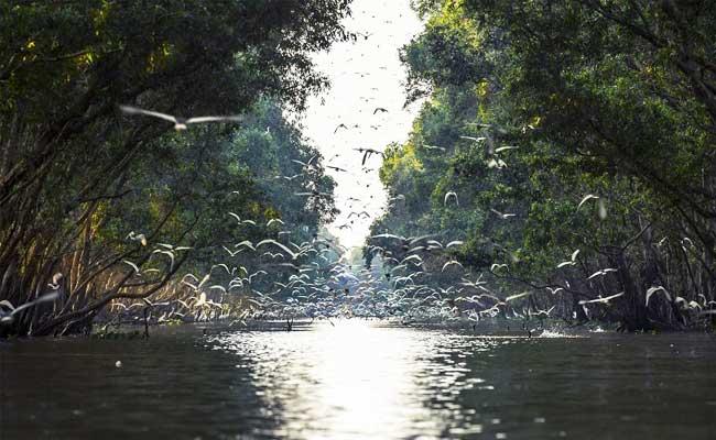 croisiere delta du mekong parc national tram chim