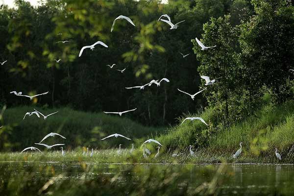 visiter delta mekong oiseaux