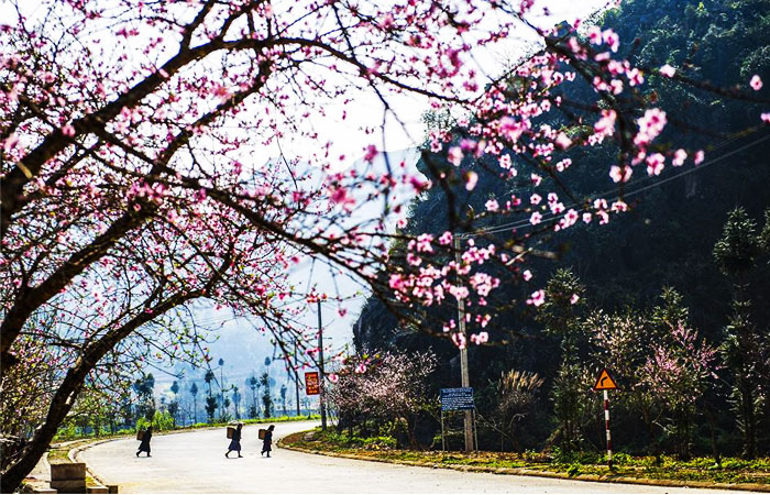 ha giang destination 4 saisons printemps