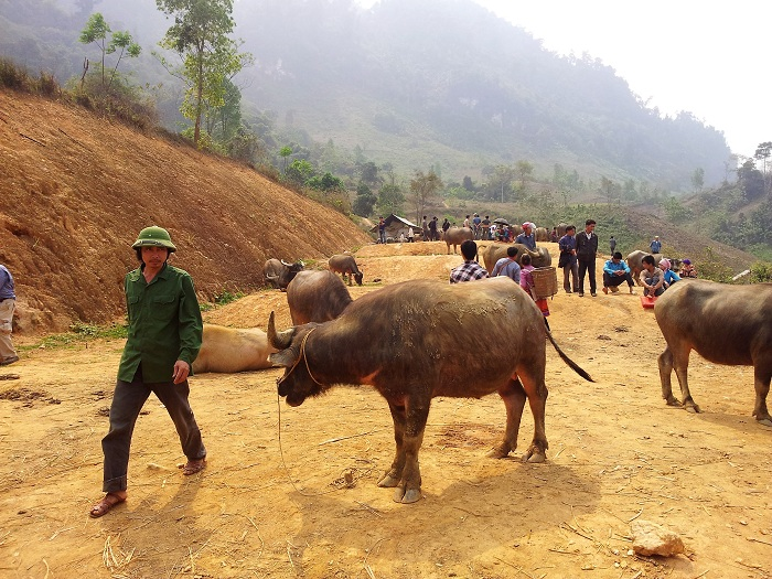 marche heddomadaire coc ly visiter  bac ha animaux