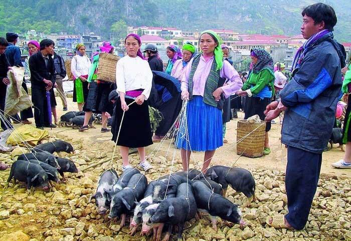 montagnard bac ha vente porc