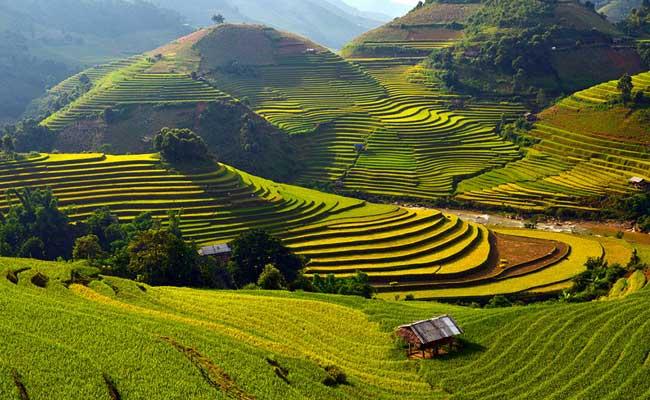 que visiter au vietnam mu cang chai