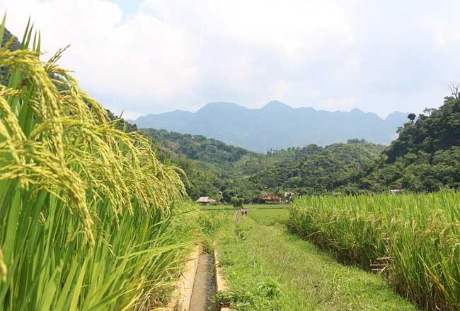 pu luong vietnam randonnee