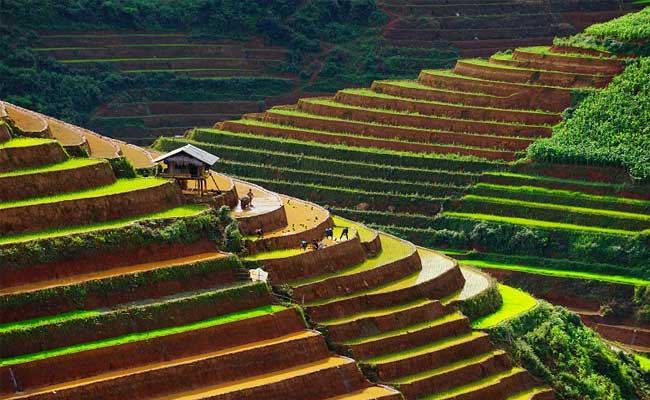 quand partir au vietnam climat du vietnam rizieres terrasse sapa