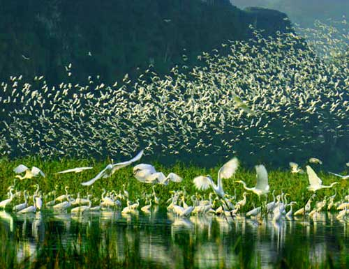 thung nham parc oiseaux