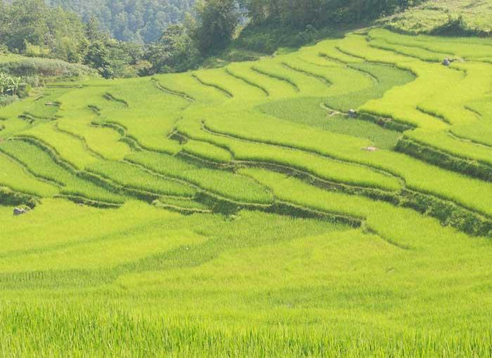 pu luong champs en terrasses