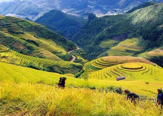 vietnam rizieres terasses sapa
