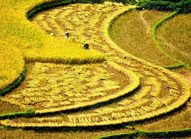 voyage vietnam aout sapa