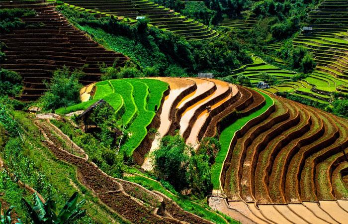 vietnam en mai mu cang chai